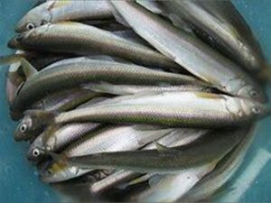 Smelts (Whole, Cleaned, Fresh)