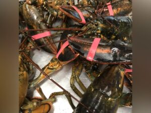 Lobster ( live local fresh)