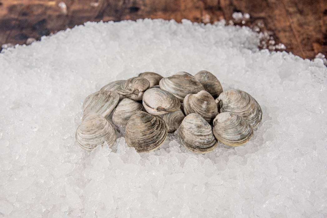 rhode-island-shellfish-company-067